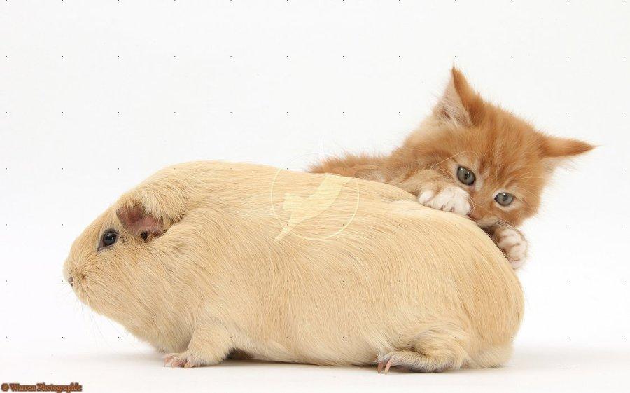 可爱的动物们-自由交流社区-我图网创意设计交流社区